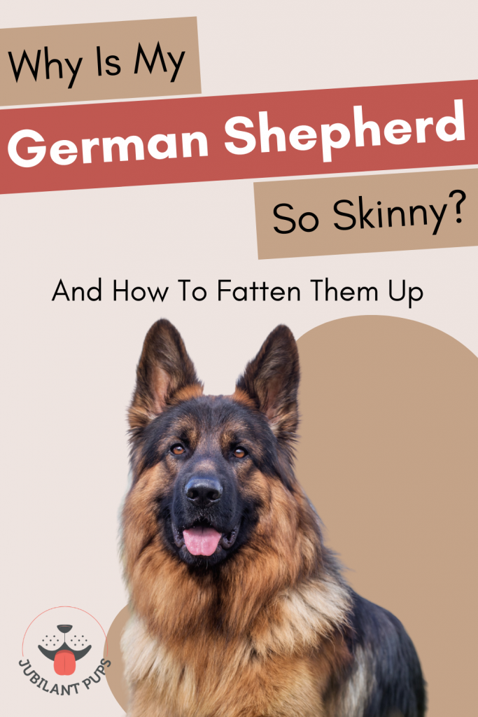 why is my german shepherd so skinny