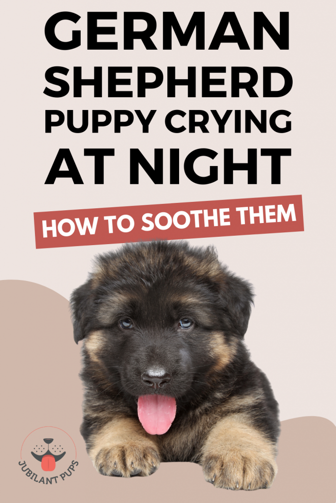 Why is your german shepherd puppy crying at night (and how to soothe them)