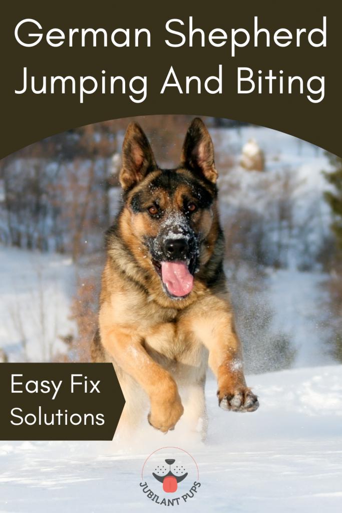 german shepherd jumping and biting