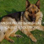German Shepherd Barking At Night (Causes & Solutions)