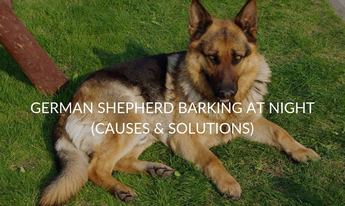 German Shepherd Barking At Night (Causes & Solutions)