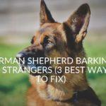 German Shepherd Barking At Strangers (3 Best Ways To Fix)