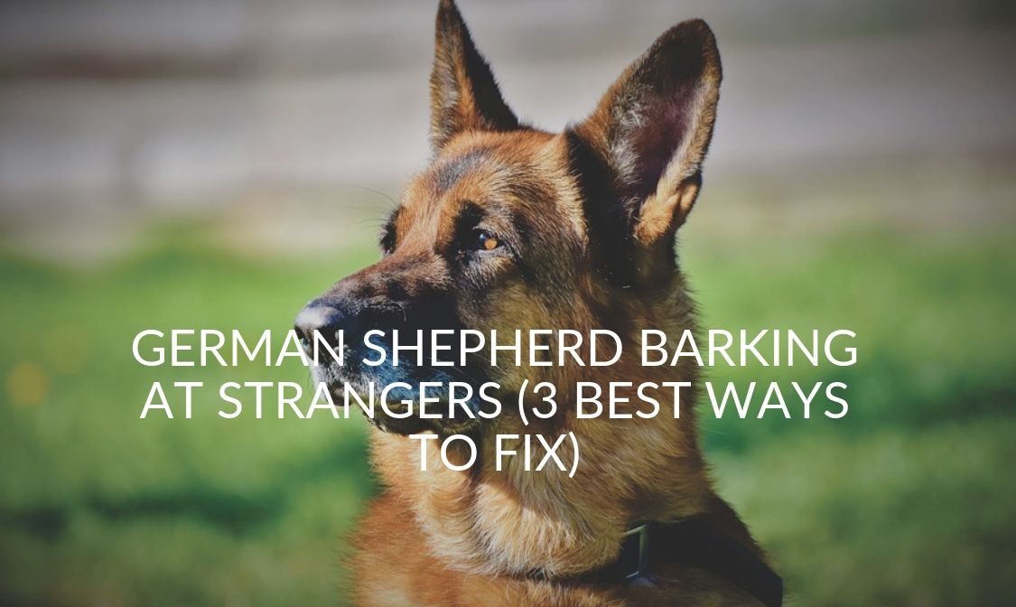 German Shepherd Barking At Strangers (3 Best Ways To Fix)