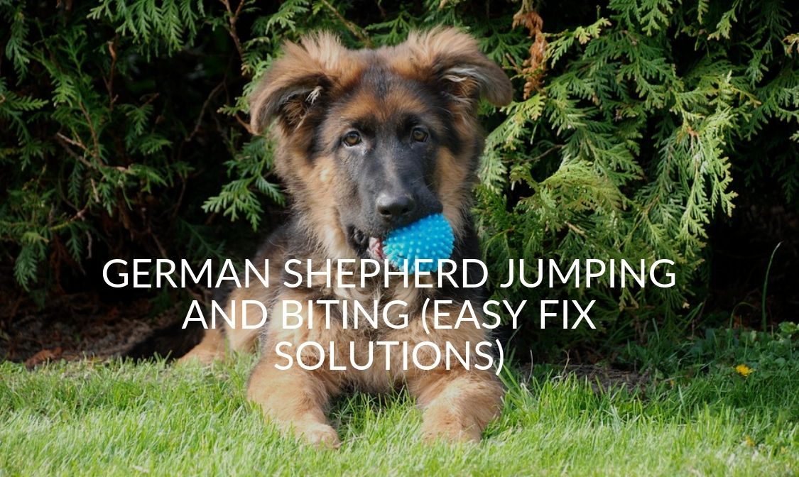 German Shepherd Jumping And Biting (Easy Fix Solutions)