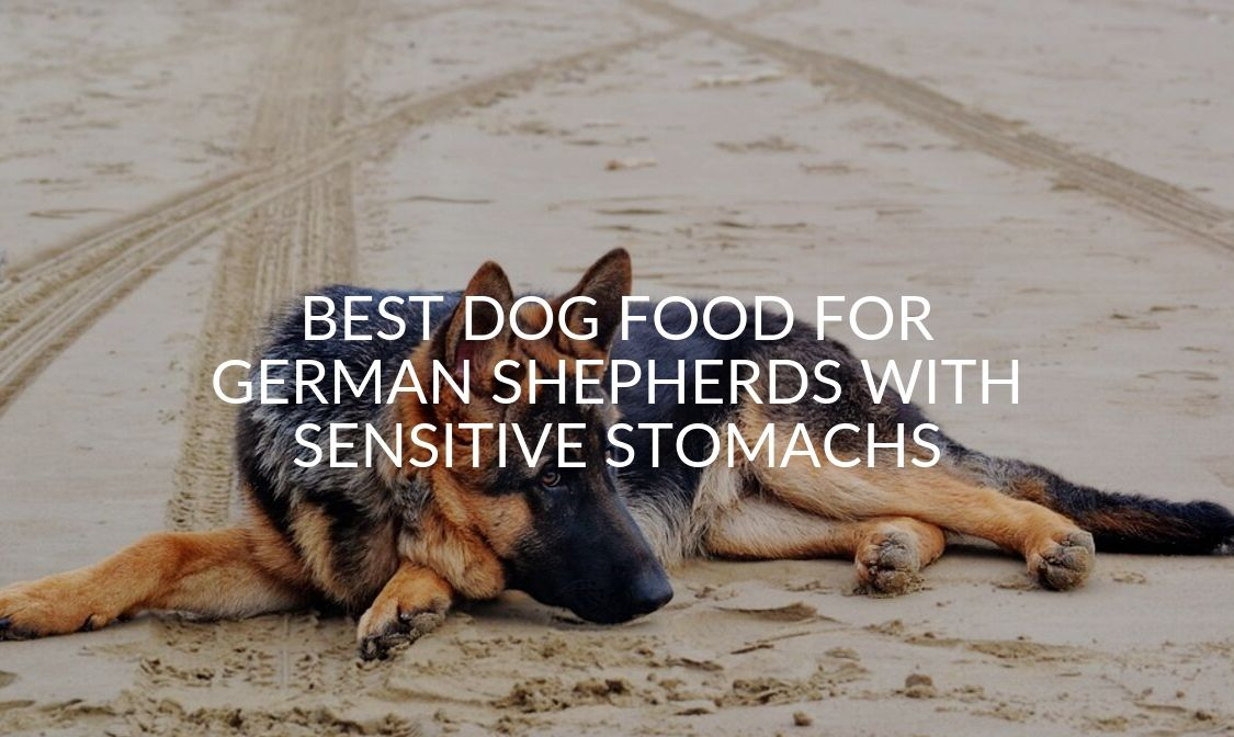 Best Dog Food For German Shepherds With Sensitive Stomachs