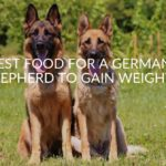 Best Food For A German Shepherd To Gain Weight (Top 5)