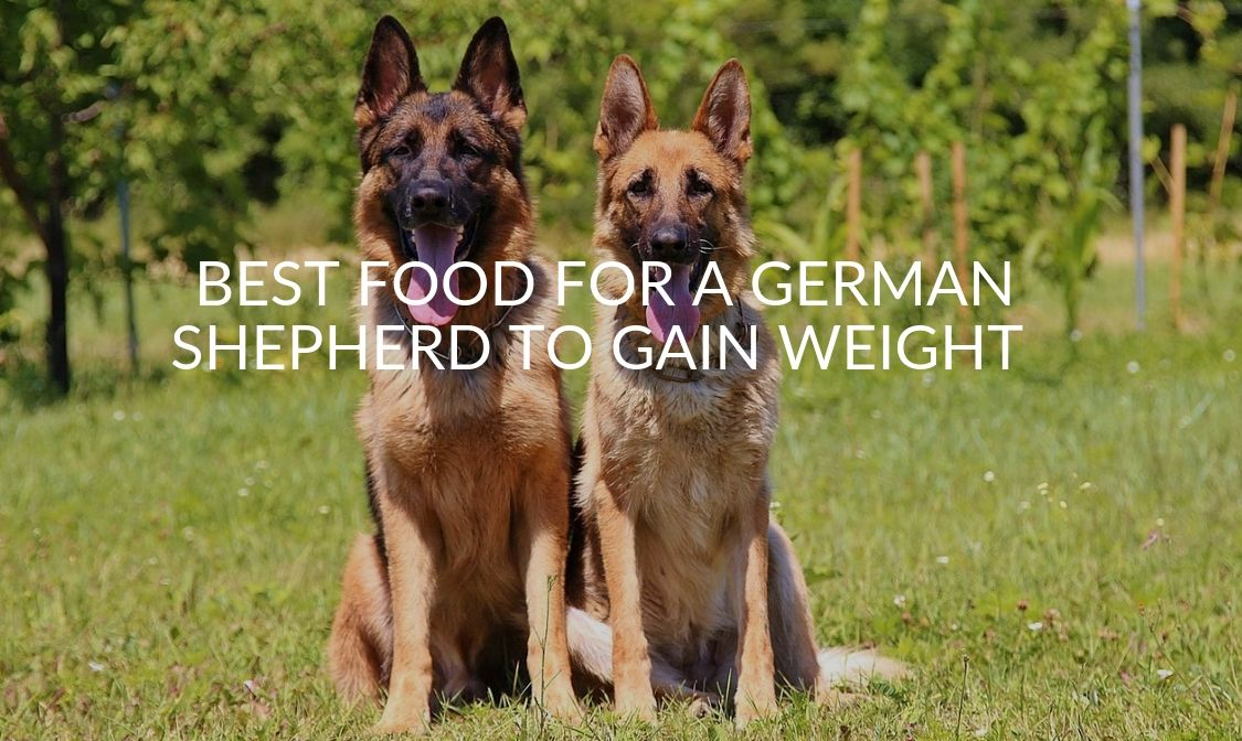 Best Food For A German Shepherd To Gain Weight