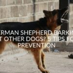 German Shepherd Barking At Other Dogs? 7 Tips For Prevention