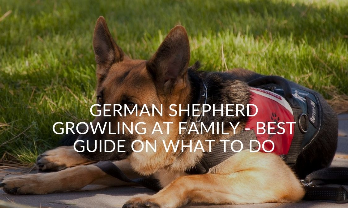 German Shepherd Growling At Family