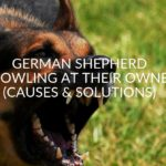 German Shepherd Growling At Their Owner (Causes & Solutions)