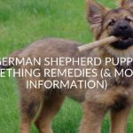 German Shepherd Puppy Teething Remedies