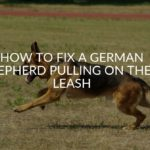 how to fix a german shepherd pulling on their leash