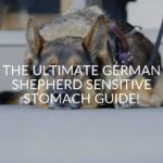 The Ultimate German Shepherd Sensitive Stomach Guide!