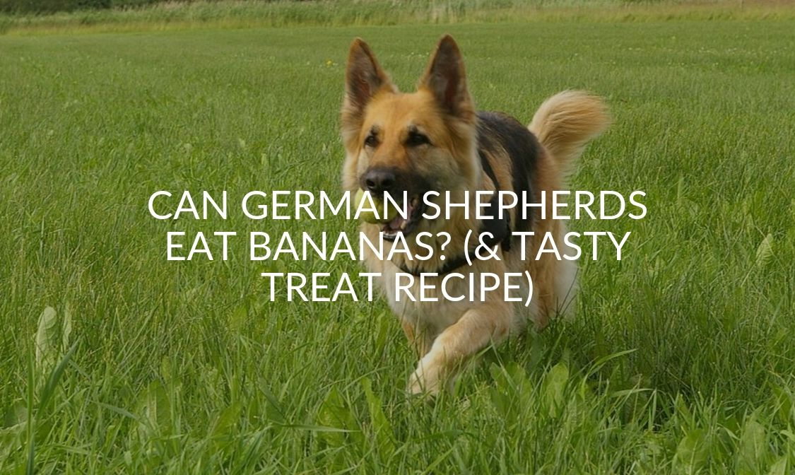 Can German Shepherds Eat Bananas_ (& Tasty Treat Recipe)