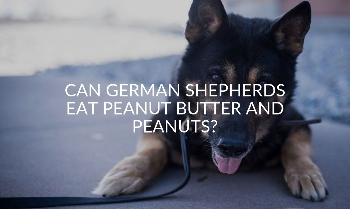 Can German Shepherds Eat Peanut Butter And Peanuts_