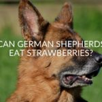 Can German Shepherds Eat Strawberries?