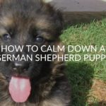 How To Calm Down A German Shepherd Puppy