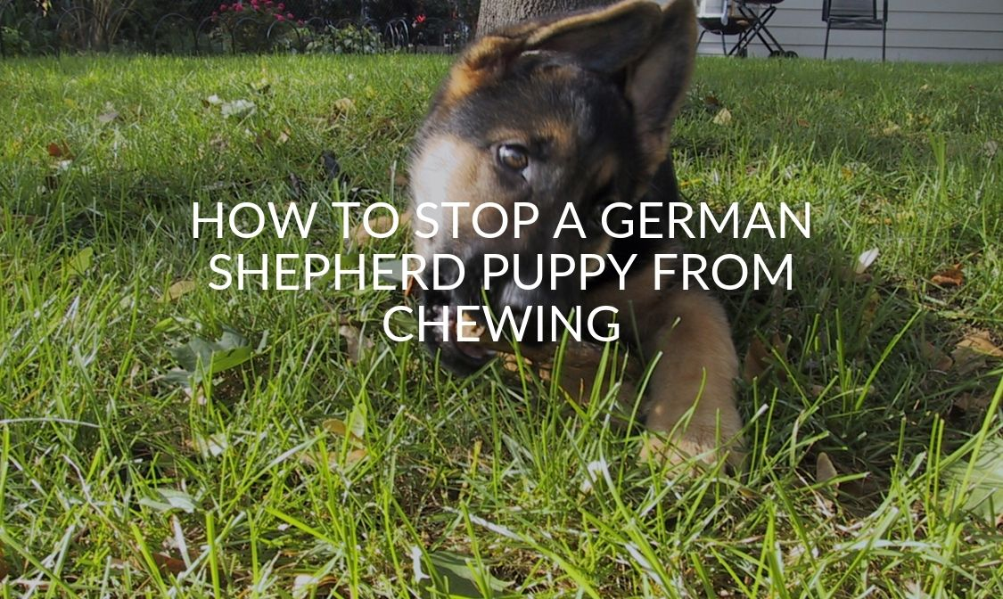 How To Stop A German Shepherd Puppy From Chewing