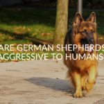 Are German Shepherds Aggressive To Humans_