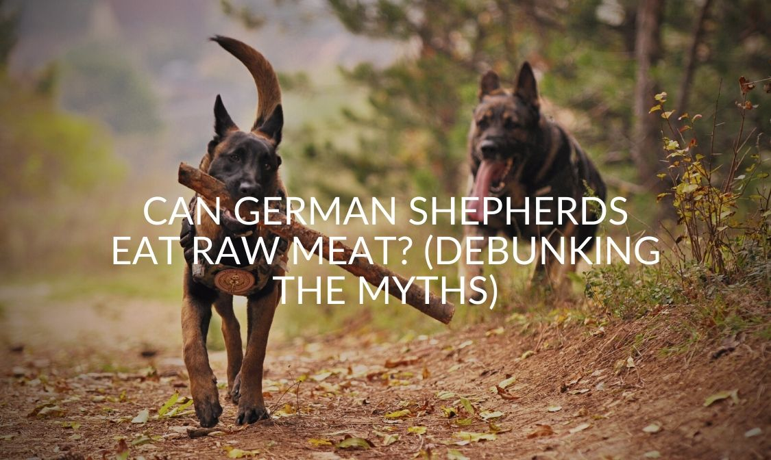 Can German Shepherds Eat Raw Meat_ (Debunking The Myths)