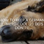 How To Keep A German Shepherd Cool (23 Do's & Don'ts)