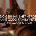 Do German Shepherds Make Good Family Pets? (The Good & Bad)