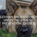 German Shepherd Hot Spots (Treatment, Prevention, Causes)