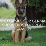 Mind Games For German Shepherds (14 Great Games!)
