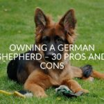 Owning A German Shepherd - 30 Pros And Cons (FAQ's Included)