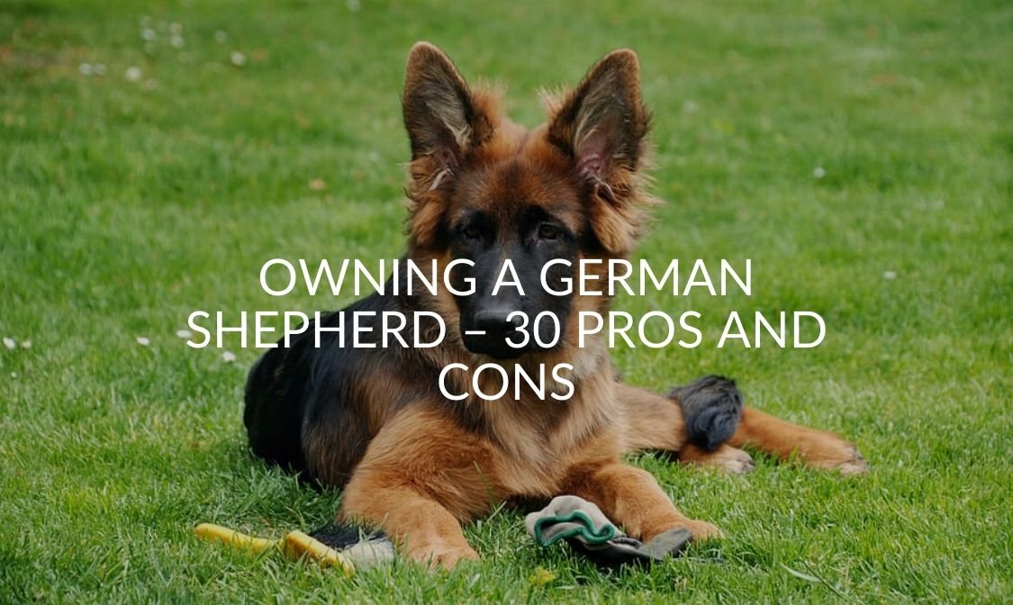 Owning A German Shepherd – 30 Pros And Cons