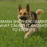 German Shepherd Barking (What Causes It And How To Stop It!)