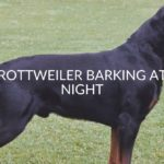 Rottweiler Barking At Night