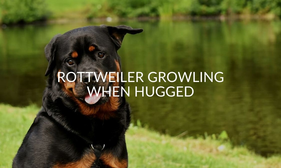 Rottweiler Growling When Hugged