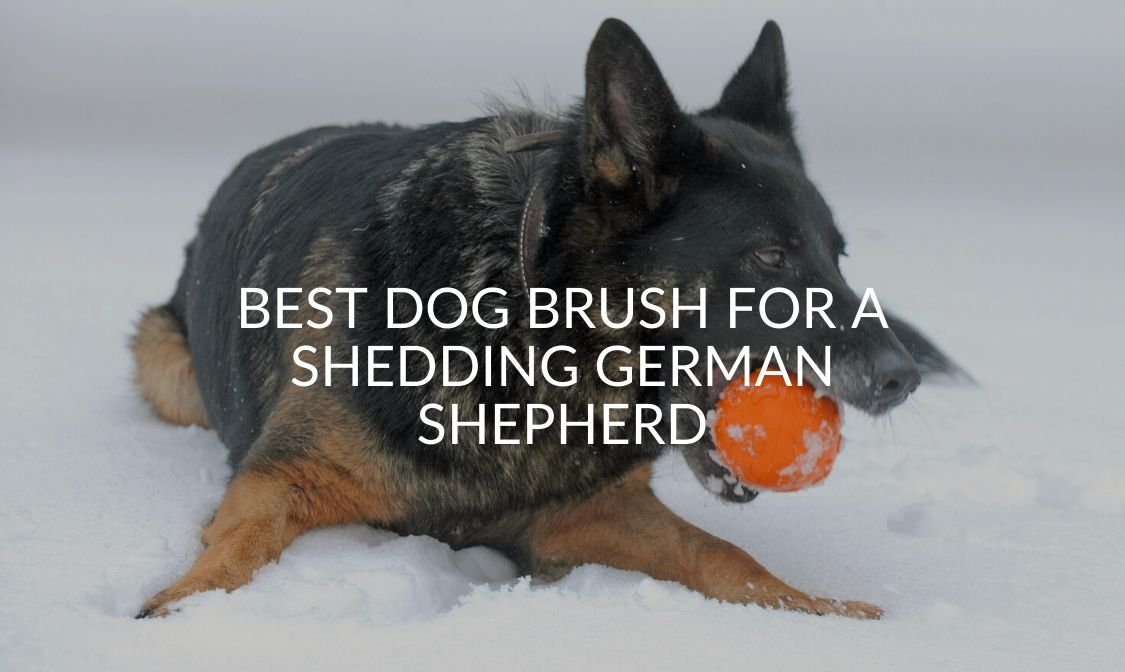 Best Dog Brush For A Shedding German Shepherd