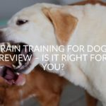 Brain Training For Dogs Review - Is It Right For You?