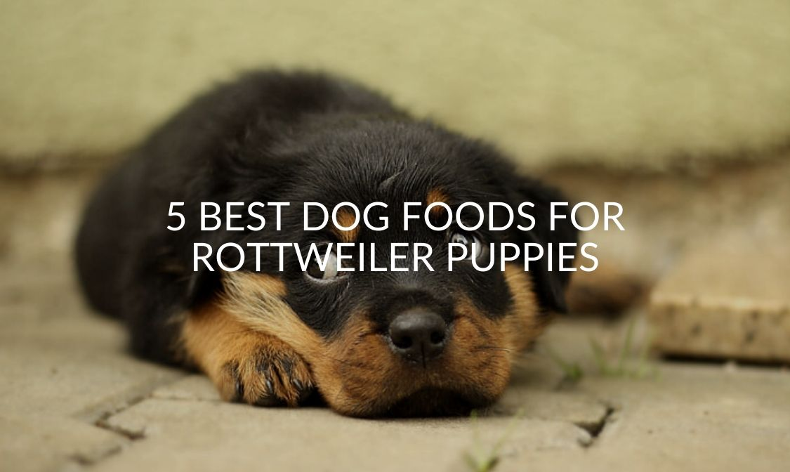 5 Best Dog Foods For Rottweiler Puppies
