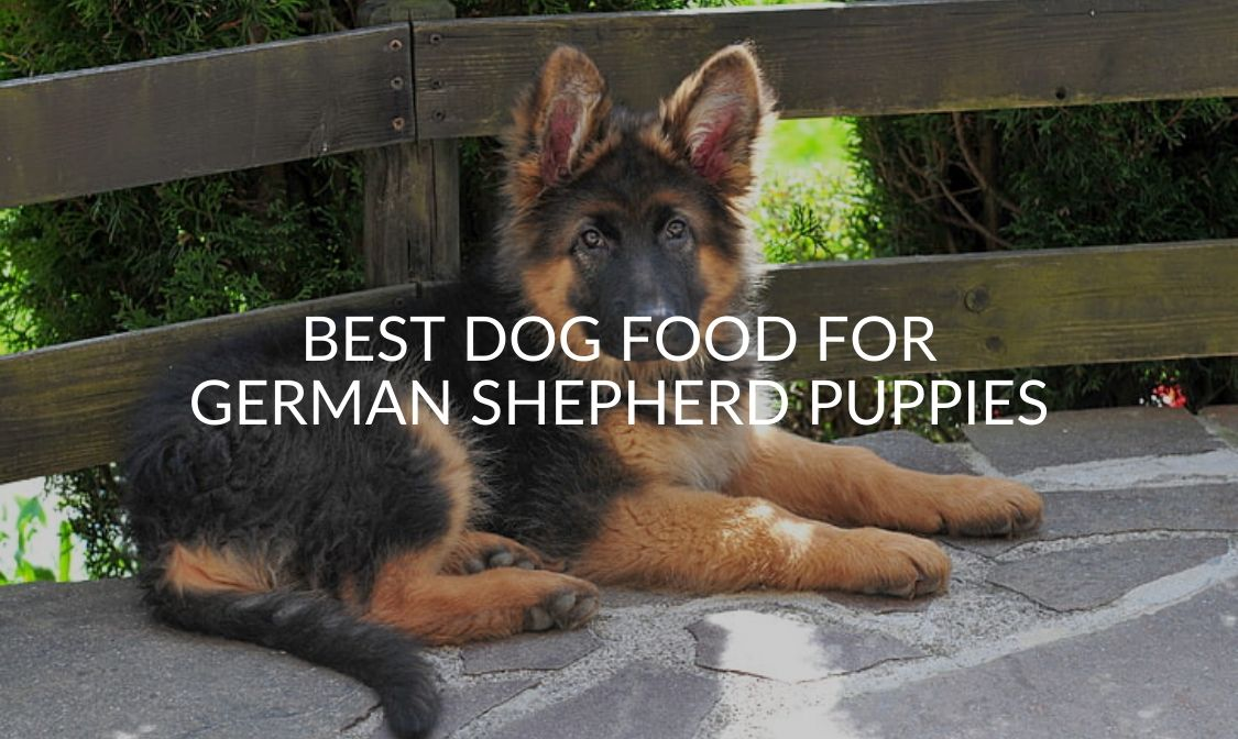 Best Dog Food for German Shepherd Puppies
