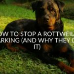 How To Stop A Rottweiler Barking (And Why They Do It)