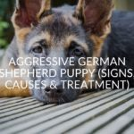 Aggressive German Shepherd Puppy (Signs, Causes & Treatment)
