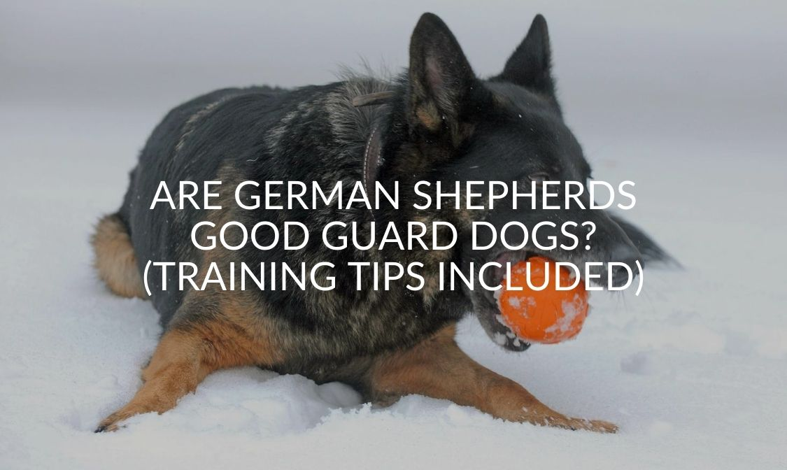 Are German Shepherds Good Guard Dogs_ (Training Tips Included)