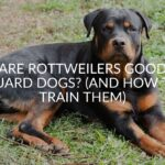 Are Rottweilers Good Guard Dogs? (And How To Train Them)