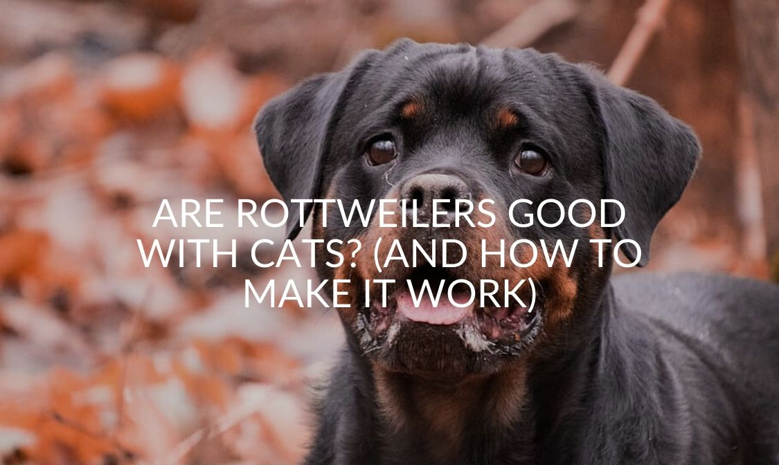 _ Are Rottweilers Good With Cats_ (And How To Make It Work)