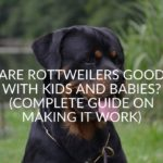 Are Rottweilers Good With Kids and Babies? (Complete Guide On Making It Work)