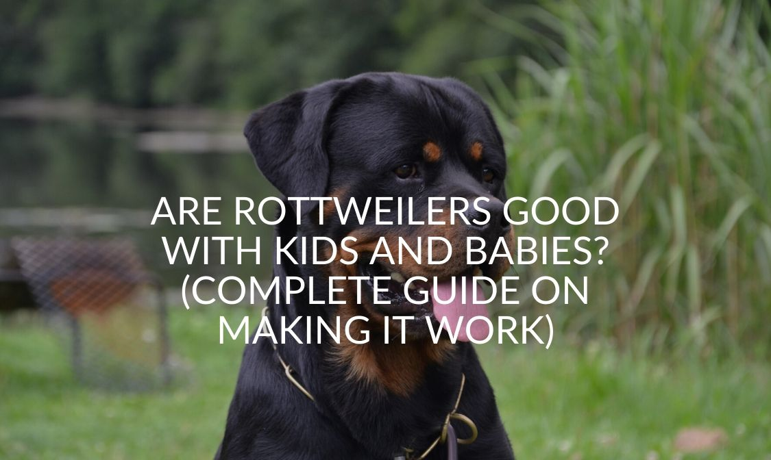 _ Are Rottweilers Good With Kids and Babies_ (Complete Guide On Making It Work)