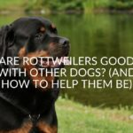 Are Rottweilers Good with Other Dogs_ (And How To Help Them Be)