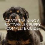 Crate Training A Rottweiler Puppy (Complete Guide)