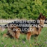 German Shepherd Biting Force (Comparison Chart Included)
