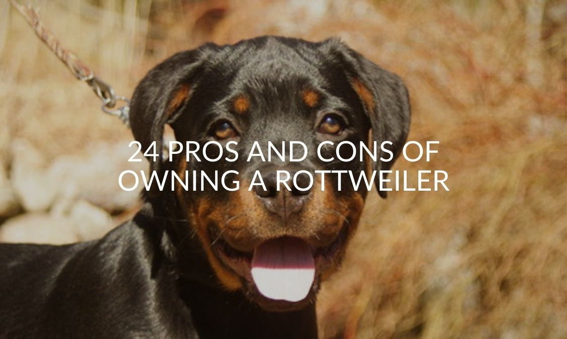 24 Pros And Cons Of Owning A Rottweiler