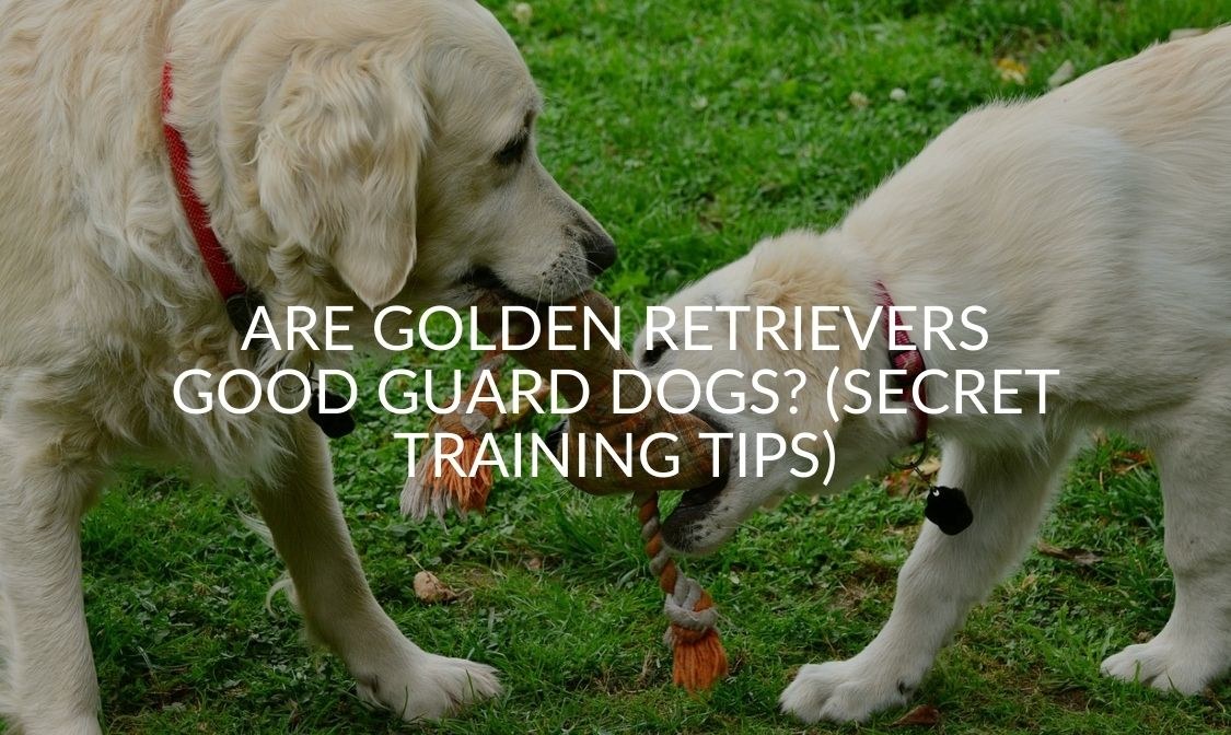Are Golden Retrievers Good Guard Dogs_ (Secret Training Tips)