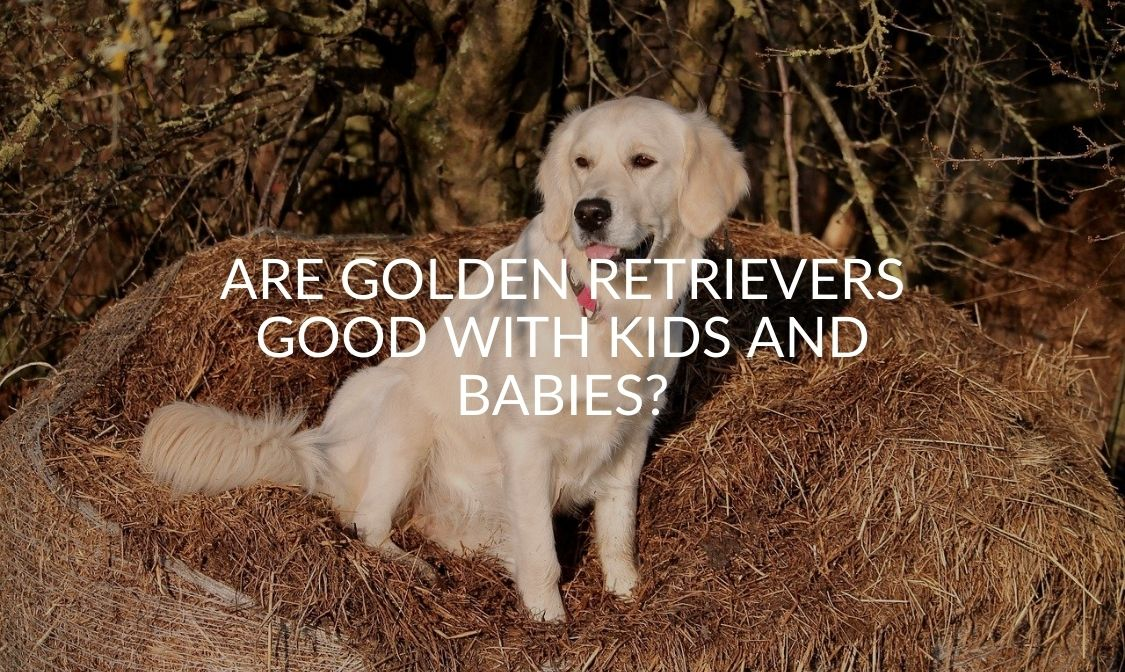 Are Golden Retrievers Good With Kids And Babies_